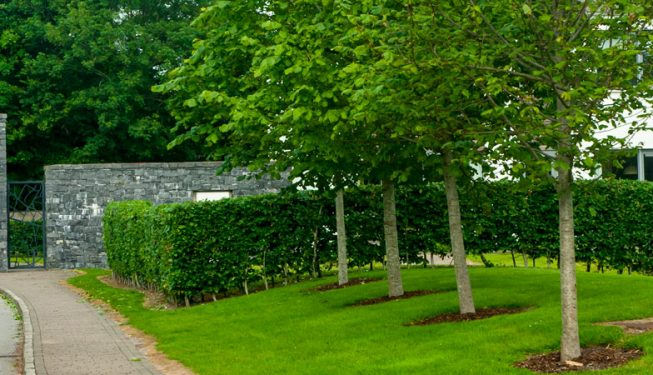 Tree Planting at Castlemartyr Resort Entrance Driveway