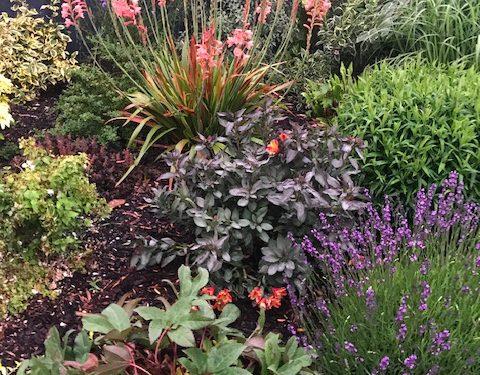 Planting & Garden Makeover - Private Residence